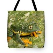 Amazon Leaf Frog Tote Bag