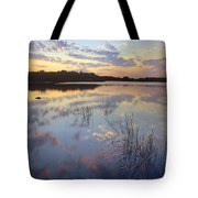American Alligator Everglades Np Florida Tote Bag