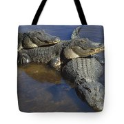 American Alligators In Shallows Florida Tote Bag