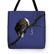 American Bald Eagle 1 Tote Bag
