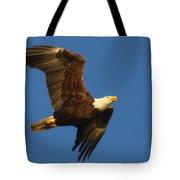 American Bald Eagle Close-ups Over Santa Rosa Sound With Blue Skies Tote Bag