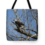 American Bald Eagle In Illinois Tote Bag