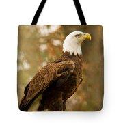 American Bald Eagle Resting Tote Bag by Douglas Barnett