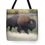 American Bison On The Madison River Tote Bag