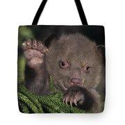 American Black Bear Cub Wildlife Rescue Tote Bag