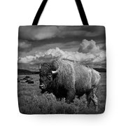 American Buffalo Or Bison In The Grand Teton National Park Tote Bag