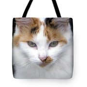 American Calico Cat Portrait Tote Bag