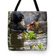 American Coot And Chick Tote Bag