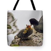 American Coot Feeding Chick Tote Bag