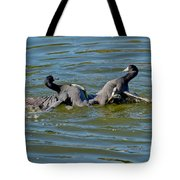 American Coots Fighting Tote Bag