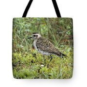 American Golden Plover Tote Bag