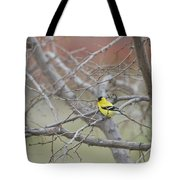 American Goldfinch 1 Tote Bag by Roger Snyder