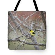 American Goldfinch 1 Tote Bag