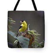 American Goldfinch 5 Tote Bag