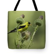 American Goldfinch Eating Thistle Seed Tote Bag