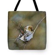 American Goldfinch On A Cedar Twig Tote Bag