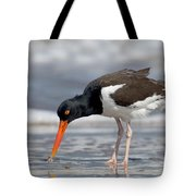 American Oystercatcher Feeding On Clam Tote Bag