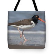 American Oystercatcher On Beach Tote Bag