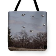 American Pelican Fly-over Tote Bag