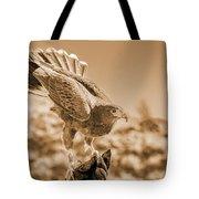 American Red Tail Hawk Tote Bag