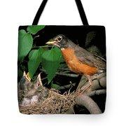 American Robin Feeding Its Young Tote Bag