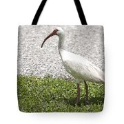 American White Ibis Poster Look Tote Bag