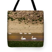American White Pelicans Tote Bag
