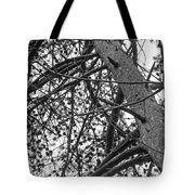 Amidst The Pines Is The Barrens Tote Bag