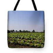 Amish Tobacco Fields Tote Bag