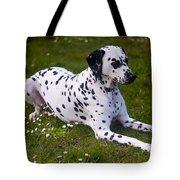 Among The Daisies. Kokkie. Dalmation Dog Tote Bag