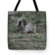 Gray Squirrel Among The Pine Cones Tote Bag