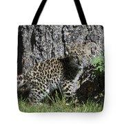 Amur Leopard Cub Antics Tote Bag