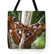 An Atlas Moth  Tote Bag
