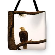 An Eagle Day Dreaming Tote Bag
