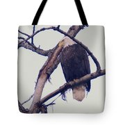 An Eagle Resting  Tote Bag