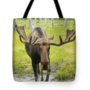 An Elk Standing In A Puddle Of Water Tote Bag by Doug Lindstrand