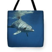 An Indo Pacific Bottlenose Dolphin Tote Bag