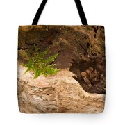 An Isolated Moss Plant Tote Bag