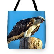 An Osprey Calling Tote Bag