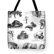 Anatomy: Human Ear Tote Bag