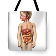 Anatomy Of A Childs Full Digestive Tote Bag