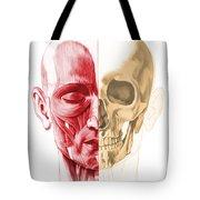 Anatomy Of A Male Human Head, With Half Tote Bag by Leonello Calvetti