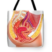 Anatomy Of Female Reproductive System Tote Bag