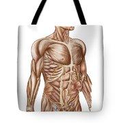 Anatomy Of Human Abdominal Muscles Tote Bag