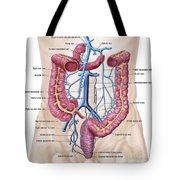 Anatomy Of Human Abdominal Vein System Tote Bag