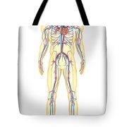 Anatomy Of Human Body And Circulatory Tote Bag by Stocktrek Images