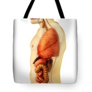 Anatomy Of Human Body Showing Whole Tote Bag by Stocktrek Images
