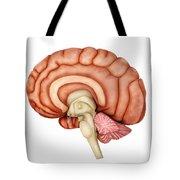 Anatomy Of Human Brain, Side View Tote Bag