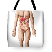 Anatomy Of Human Digestive System, Male Tote Bag
