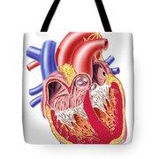 Anatomy Of Human Heart, Cross Section Tote Bag